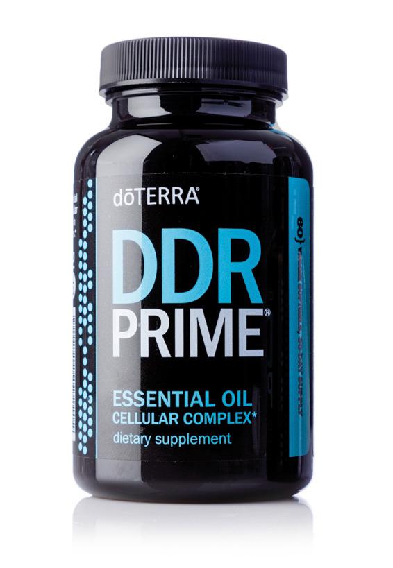 DDR Prime Complex